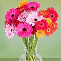 Gerberas wedding flower