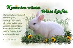 Kaninchen würden Wiese kaufen - Start