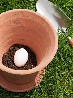The size of your pot depends on the size of your plant: 20-inch-diameter pots work well for tomatoes and eggplants, and 4-inch pots are great for herbs. Fill the pot with 2 inches of potting soil. Place one uncracked raw egg in the pot — as it decomposes, it will serve as a natural fertilizer — and cover with soil.