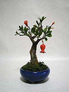 Pomegranate #Bonsai