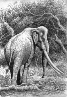 Palaeoloxodon recki by Willem Svd der Merwe on DeviantArt