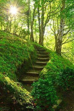I havecto experience this place! So beautiful. Mossy Stairs, Perthshire, Scotland.