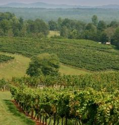 Second Annual Rabun County Farm Winery Day on August 11, 2012.