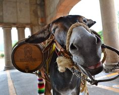 Introducing you to Cuco, the burro from Herradura. I loved taking his photo.