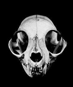 You lookin' at something, pal? - cat skull