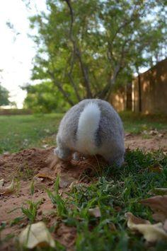 Bunny Butt ♡♡♡♡