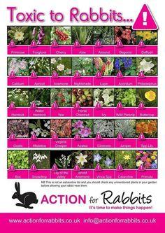 Plants toxic to rabbits