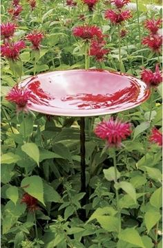 How pretty with red bee balm all around.