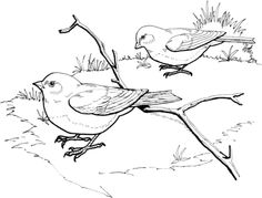 Click To See Printable Version Of Dark Eyed Slate Colored Junco Birds Coloring Page