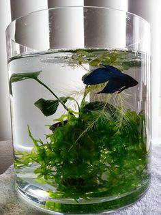 Just love the idea of using jars, bottles etc as a planted aquarium.....LIST: low tech, mini, nano, pico planted tanks