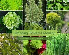 Wedding Flowers-Greenery Greenery and Green Wedding Flowers for all Seasons.