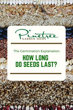 How long do seeds last? How do I do a germination test? Pinetree Garden Seeds can help you answer these questions. Herb Garden, Vegetable Garden, Home And Garden, Urban Gardening, Gardening Tips, Starting Seeds Indoors, Farmhouse Garden, Garden Seeds, Seed Starting