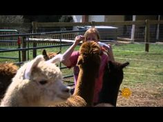 Alpacas: Loveable Lawnmowers No More - http://modernfarmer.com/2014/11/alpaca-industry-matures-growing-pains/?utm_source=PN&utm_medium=Pinterest&utm_campaign=SNAP%2Bfrom%2BModern+Farmer