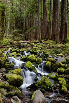 50 best olympic national park washington state images in 2019 rh pinterest com