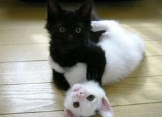 yin and yang!