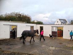 Connemara Equestrian Escapes - Horse Riding Holidays In Ireland Riding Holiday, Ireland Holiday, Connemara, Horse Riding, Horseback Riding, Equestrian, Outdoor Structures, Horses, Holidays