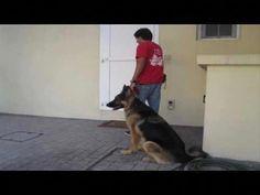 ▶️ How to teach your dog to CALMLY walk on a LOOSE LEASH (part II) - YouTube #teachdogtocome
