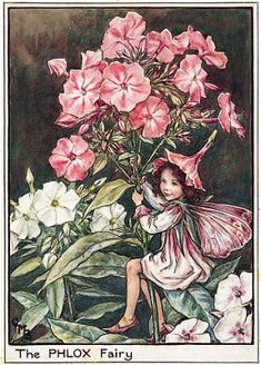 We look at Cicely Mary Barker's The Flower Fairies illustrations from a new exhibition at Mottisfont Abbey.