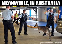 Meanwhile in Australia Pictures-- some are better than others!