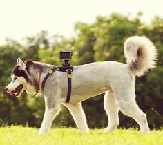 Dog Camera. Yes, hook the GoPro up to the dog! :)