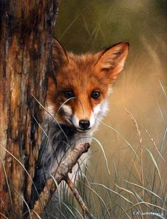 Carl Whitfield, Original oil painting on panel, Fox in the Grass Art at York Fine Arts Online, Buy Original Fine Art in the UK Wildlife Paintings, Wildlife Art, Animal Paintings, Beautiful Creatures, Animals Beautiful, Planeta Animal, Animals And Pets, Cute Animals, Fox Painting
