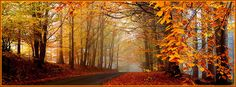 Tall and Prosperous Trees, Leaves Turning Yellow, What an Uncomparable Scene – Autumn Natural Scenery Wallpaper Fall Facebook Cover, Free Facebook Cover Photos, Facebook Timeline Covers, Fall Cover Photos, Timeline Cover Photos, Cover Pics, Cover Wallpaper, Scenery Wallpaper, Photo Wallpaper