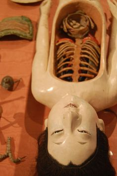 Anatomical dummy (National Museum of Health and Medicine) by Prof. Jas. Mundie, via Flickr #anatomy