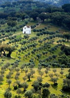 Olive fields in Extremadura, Portugal/Spain Places Around The World, Oh The Places You'll Go, Places To Travel, Places To Visit, Around The Worlds, Algarve, Beautiful World, Beautiful Places, Foto Picture