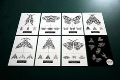 hasting moth postcard
