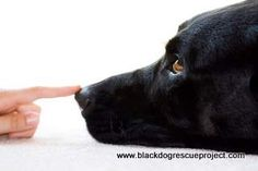 Every dog benefits from basic dog obedience training: Links to all types of training