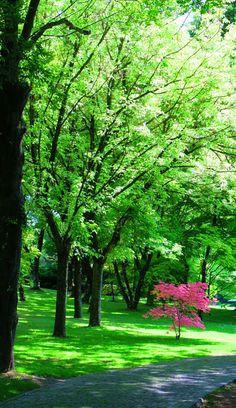 Valeggio sul Mincio Parco giardino di Sigurtà Hello Spring, Golf Courses, Italia