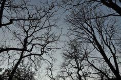 Foresta stregata - Villa Borghese - Roma