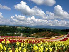 Flowers are the music of the ground~ Summer season in Furano, Hokkaidō, Japan