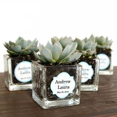 Wedding Gifts For Guests Mini Square Glass Succulent Favor. Prefect guest gift for any celebration. Wedding Favor Table, Creative Wedding Favors, Inexpensive Wedding Favors, Wedding Gifts For Guests, Wedding Table Centerpieces, Wedding Favours, Wedding Decorations, Wedding Giveaways For Guests, Wedding Tables
