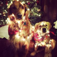 Peggy's Pet Place: holiday dogs from modern dog
