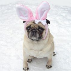 Pin for Later: Your Comprehensive Guide to Dog and Cat Halloween Costumes Bunny