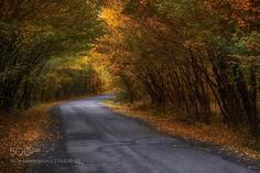 autumn mood (Hungary) by Gábor Ősz / Cool Landscapes, Beautiful Landscapes, Photos Of The Week, Nature Photos, Land Scape, Hungary, Landscape Photography, Travel Photography, Cool Photos