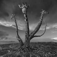 Polish photographer Dariusz Klimczak constructs surreal landscapes through clever manipulation. Each image in the skilled photo editor's growing collection is a composite of multiple elements that work in unison to present a cohesive, albeit unusual, scene. More often than not, Klimczak's subjects are situated in deserted, barren lands that make the viewer question how any of the characters wound up in that spot.