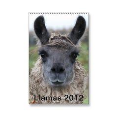 Llama Calendar 2012 from http://www.zazzle.com/2012+llama+calendars