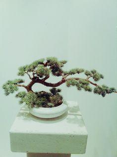Bonsai Ideas On Pinterest Bonsai Trees And Miniature