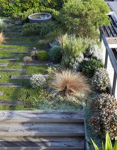 Shade Garden Design A Robust Rooftop Garden In Rozelle Australian Garden Design, Australian Native Garden, Coastal Gardens, Olive Garden, Garden Architecture, Sustainable Architecture, Residential Architecture, Contemporary Architecture, Garden Landscape Design
