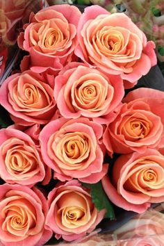 2250 best flowers images on pinterest in 2018 beautiful flowers the miss piggy rose has become a firm bridal favourite as it crosses over the colour scheme of pink or peach perfectly mightylinksfo