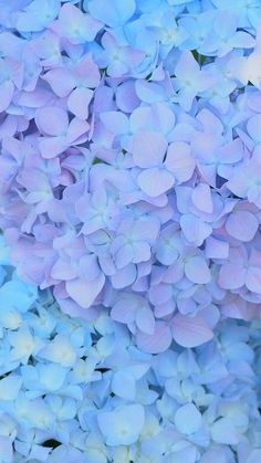 Trendy Ideas For Aesthetic Wallpaper Pastel Nature Beautiful Flowers Pictures, Beautiful Flowers Wallpapers, Pretty Wallpapers, Flower Pictures, Hydrangea Wallpaper, Flower Wallpaper, Blue Aesthetic Pastel, Flower Aesthetic, Flower Backgrounds
