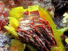 Heinrichite, Erythrite Locality: Germany Yellow-green heinrichite with red erythrite. T Henry Minot photo & collection. Minerals And Gemstones, Crystals Minerals, Rocks And Minerals, Stones And Crystals, Les Chakras, Rare Crystal, Diamond Quartz, Beautiful Rocks, Mineral Stone