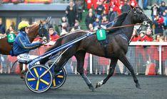 Bird Parker devrait être de la partie dans le Prix de la Belgique. Horses, Animals, Belgium, Animales, Animaux, Animal, Animais, Horse