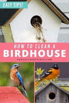 Step by Step Directions on How to Clean a Birdhouse Efficiently! Do you need to clean out your bird nesting boxes in your yard? Find out why it's important to the health of your backyard birds and some easy tips on how to clean out the birdhouse! Get your questions answered on why you should clean the backyard bird box and when it needs to be cleaned out. If you have backyard birds and birdhouses then check out these tips to nesting box maintenance and keeping your backyard birds happy and safe. Dyi Bird House, Bird House Plans, Bird Houses Diy, Bird Feeder Plans, Bird Feeders, Backyard Projects, Cool Diy Projects, Bird Houses Painted, Bird Boxes