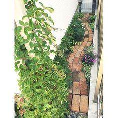 アンティークレンガを使って、玄関のアプローチや小道を作っている方も多いですよ。グリーンとレンガの風合いがとてもナチュラルで素敵ですね。