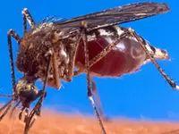 Mückenplage gegen Stechmücken Pflanzen gegen Mücken