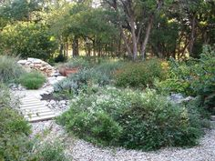 A drought-tolerant, native perennial garden in the TX Hill Country.  From Hill Country Mysteries: A Walk Around