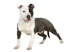 todas las razas de perros y sus nombres - Buscar con Google
